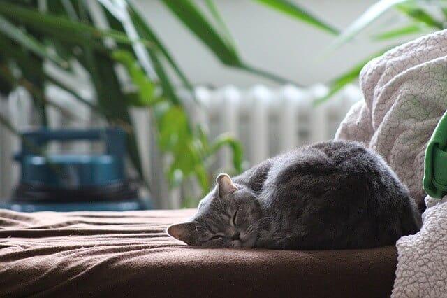 חתול, ספות