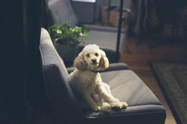 ניקוי כורסאות – המדריך לחידוש הכורסא