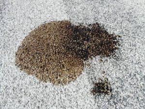 כתם שמן בשטיח