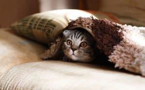שמיכה, חתול מסתתר.