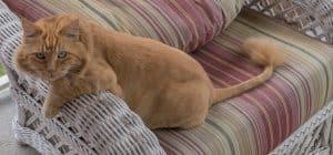חתול על הספה