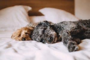 כלב ישן על ריפוד