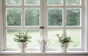 חלונות נקיים, עציצים.