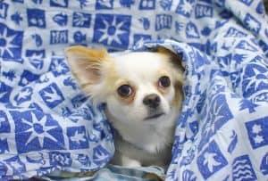 מזרונים, כלב, שמיכה