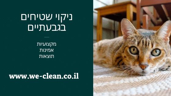 ניקוי שטיחים בגבעתיים - חברת ניקיון ווי קלין