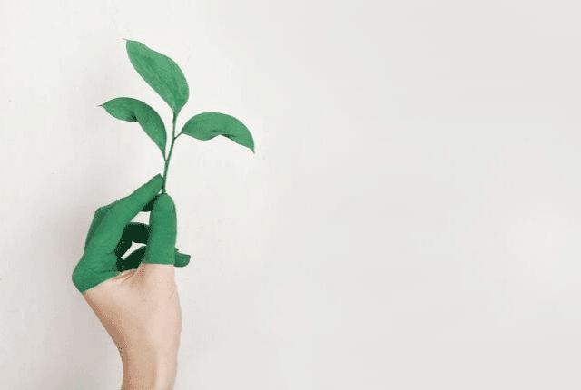 עלה ירוק, עציץ, יד